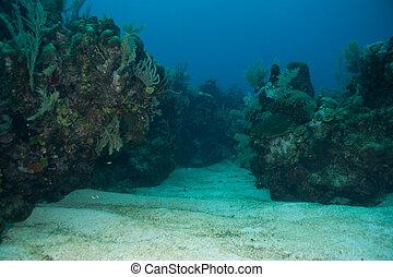 koralle, tal