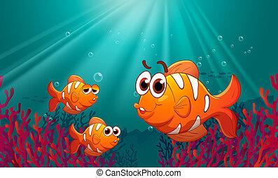 korallen, fische, drei, meer, unter