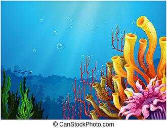 korallen, unter, der, meer