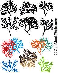 korallen, vektor, satz, riffe
