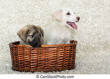 korb, hundebabys