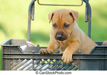 korb, junger Hund