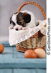 korb, junger Hund, traurige