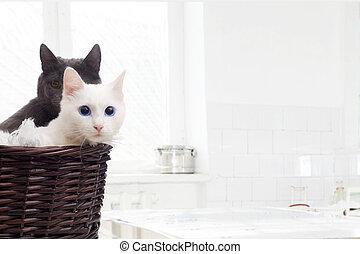 korb, Katzen