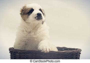 korb, Korbgeflecht, junger Hund