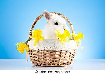 korb, Korbgeflecht, Ostern, kaninchen, Sitzen