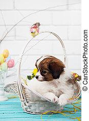 korb,  papillon, junger Hund
