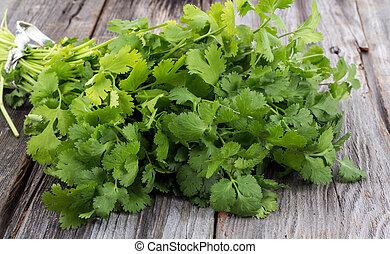 koriander, bouquetten, cilantro, of