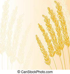 korn, guld, bakgrund