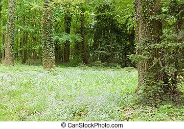kornik, arboretum