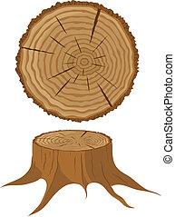 kors sektion, i, træ, og, stub