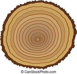 kors sektion, i, træ stub