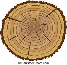 kors sektion, i, træ
