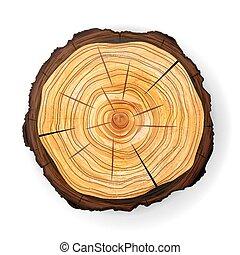 kors sektion, træ, af træ, stub, vector., omkring, skære,...