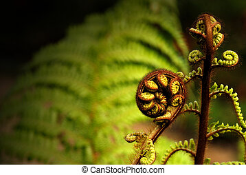 Uncurling fern plant with a full grown fern plant in the background.