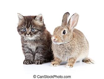 kot, i, królik