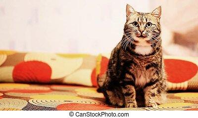 kot, jest, posiedzenie na leżance