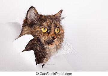 kot, porwany papier, otwór, bok
