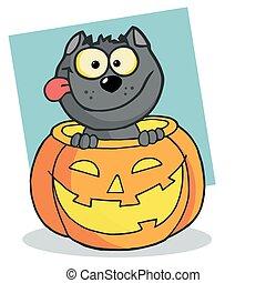 kot, szczęśliwy, dynia, czarnoskóry