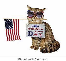 kot, w, sunglasses, z, przedimek określony przed rzeczownikami, bandera, 2