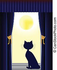 kot, wyglądając okna