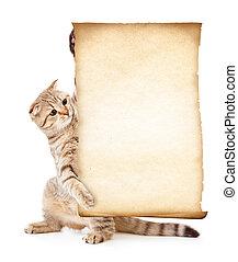 kot, z, stary, czysty, pergamin, albo, papier