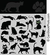 koty, zbiór