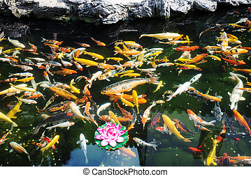 koy fish in the The Jade Buddha Temple shanghai china