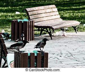 krähen, park, zwei, abfalltonne