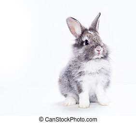 królik, odizolowany, na, niejaki, białe tło
