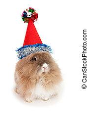 królik, rok, nowy, hat., lionhead