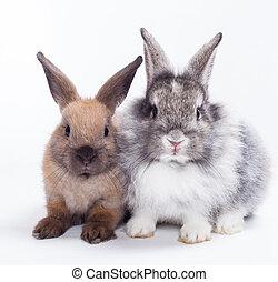 króliki, dwa