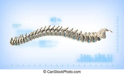 kręgosłup, obracający, kanał alfy