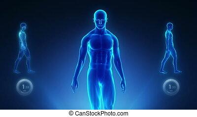 kręgosłup, rentgenowski, dobry, %u2013, postawa, pojęcie