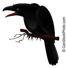 kraai, black