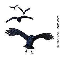 kraaien, vliegen