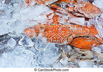 krab, in, een, ijs, blad