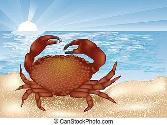 krab, morze