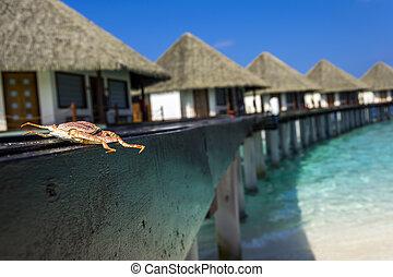 krab, stos drewna