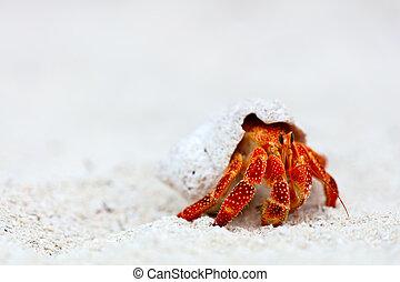 krabba, enstöring