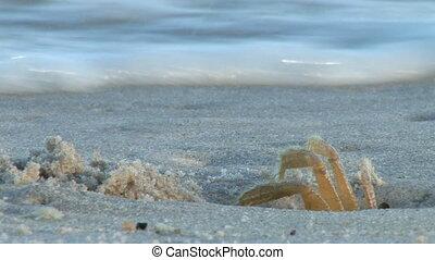 krabbe, welle