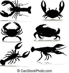 krabben, nur, vektor, silhouetten, meer