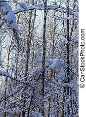 krajina, sníh- skrýt, winter kopyto, les, grafické pozadí