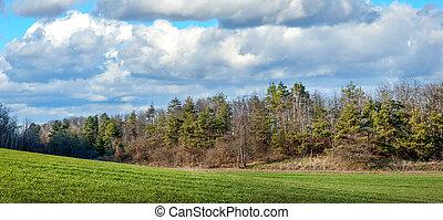 krajina, zima, bojiště, hynout ukrýt v lese, pšenice, pramen, nezkušený