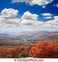 krajobraz, górski szczyt, liście, niedźwiedź