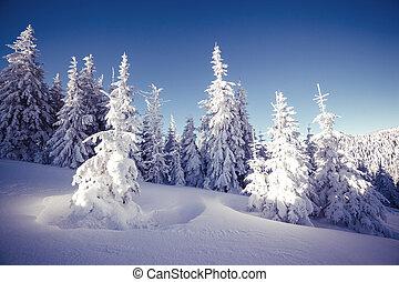 krajobraz, majestatyczny, zima
