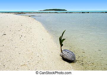krajobraz, od, jedna nożna wyspa, w, aitutaki, laguna, ugotujcie wyspy