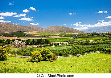 krajobraz, przylądek, winelands, miasto