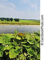 krajobraz, rolnictwo
