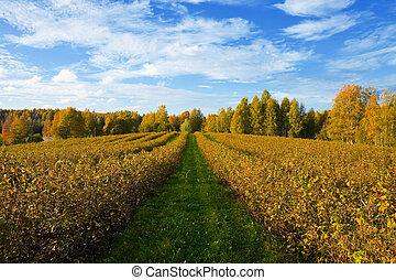 krajobraz, rolniczy, jesień